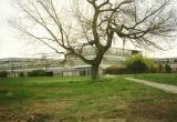 "beyond the ""Birley Tree"", the school is emptied for the last time"
